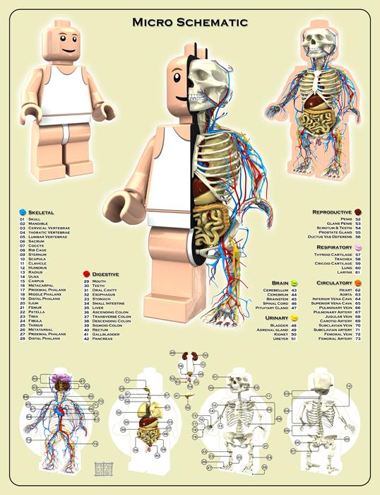 Anatomie eines Legomännchen