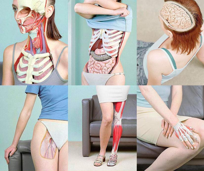 Modische Atlas der Anatomie