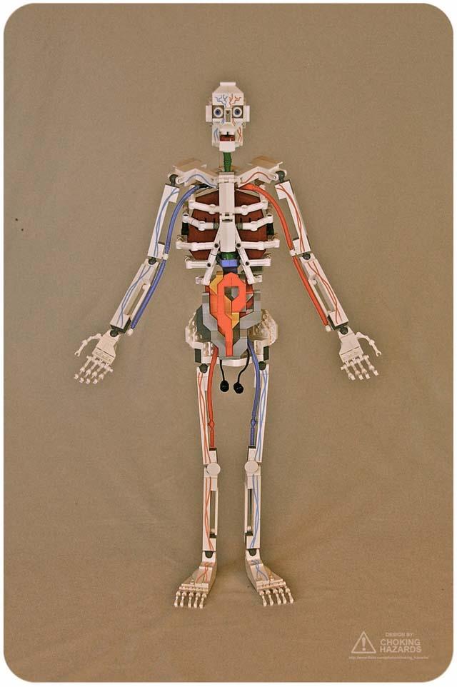 Anatomie-Modell aus Lego | Herr Pfleger
