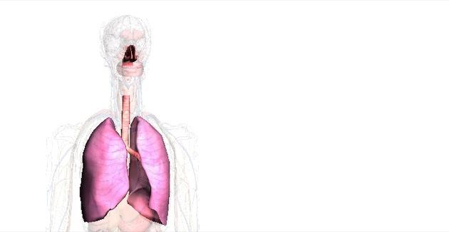 Respiratorische System beim Menschen